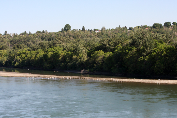 North Saskatchewan sandbar and sea gulls